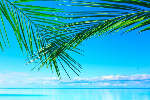Фотообои море пальмовые ветви (sea-0000194)