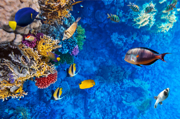 Фотообои ванная подводный мир (underwater-world-00032)