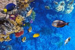 underwater-world-00155