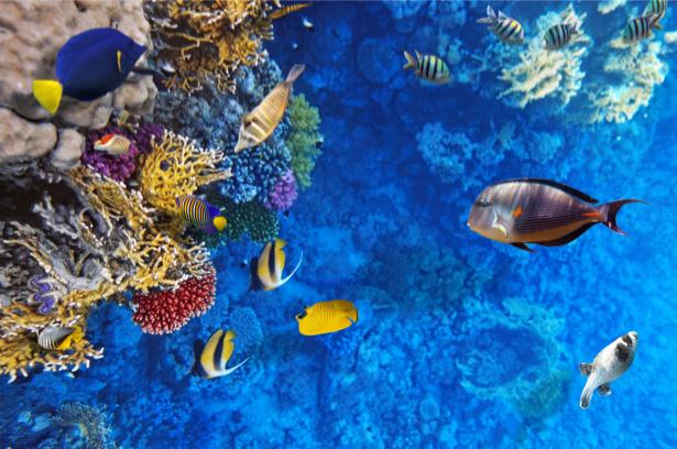 Фотообои в ванной комнате рыбки (underwater-world-00155)