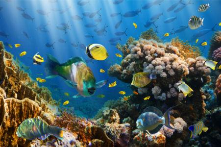 Фотообои в ванную подводный мир рыбки (underwater-world-00212)