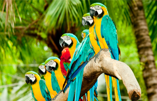 Фотообои попугаи на дереве (animals-0000040)