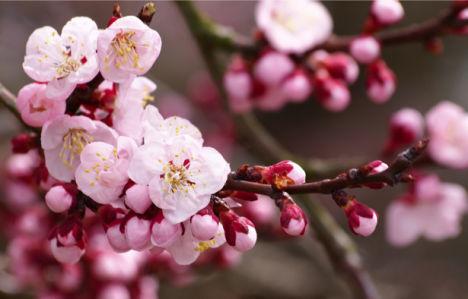Цветущая ветка фотообои на стену цветы (flowers-0000013)