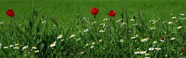 Полевые цветы для спальни фото (flowers-0000105)