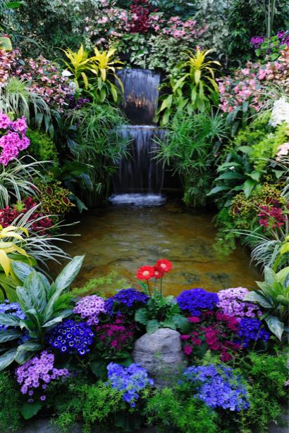 Обои фото Цветущий водоем (flowers-0000191)