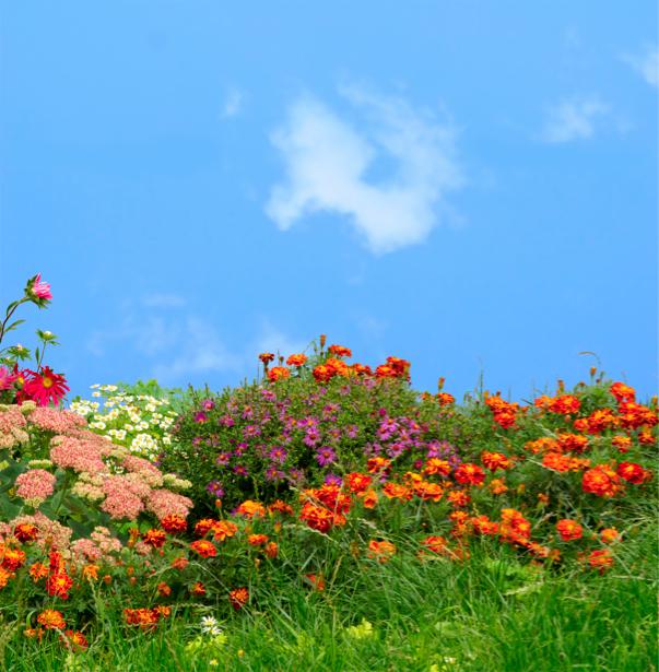 Цветы на лугу фотообои цветов на стену (flowers-0000271)