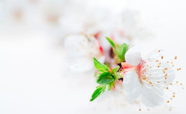 Обои фото Цветущая ветка (flowers-0000323)