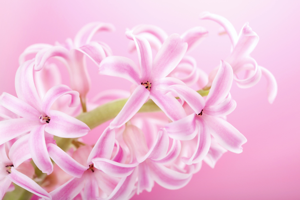 Ветка розовой орхидеи - Фото обои на стену (flowers-0000389)