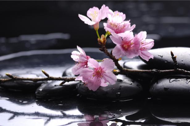 Фото обои на стену камешки и сакура (flowers-0000404)