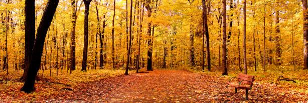 Фотообои с природой осенний лес (nature-00124)