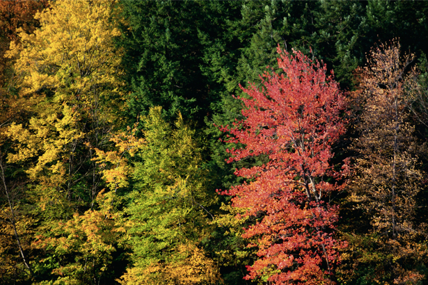 Фотообои разноцветный лес (nature-00203)