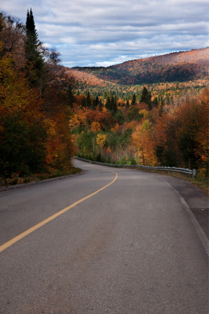 Фотообои поворот дорога лес (nature-00516)