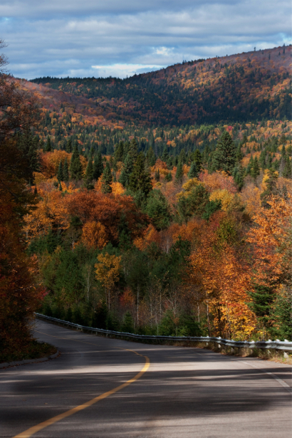 Фотообои дорога в горах лес (nature-00517)