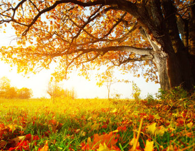 Фотообои осенний лес фото (nature-00524)
