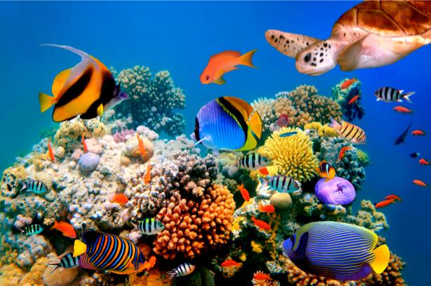 Фотообои для ванны океан риф (underwater-world-00010)