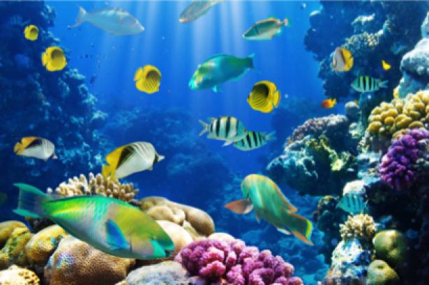 Фотообои ванная коралловый риф 3д (underwater-world-00017)