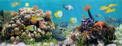 underwater-world-00210