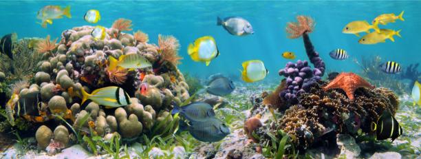 Фотообои для ванны подводой рыбки (underwater-world-00210)